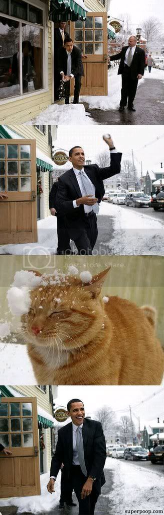 Obama throws snowball at cat
